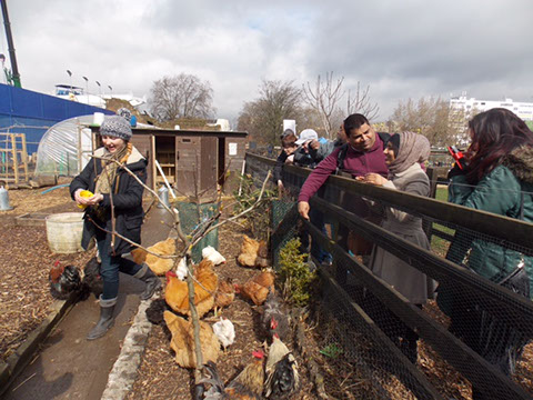 group on one side of the fence feeding the chickens on the other side 2